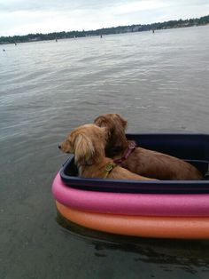 Trial run of the Wiener Barge, in shallow water. Pool noodles roped to Rubbermaid tote, sitting down prevents rocking. Add life vests and we're ready to float the river with the dogs!
