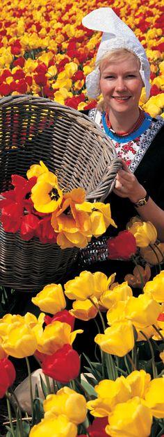 オランダ キューケンホフ公園(Keukenhof the Netherlands) Flowers, Royal Icing Flowers, Flower, Florals, Floral, Blossoms