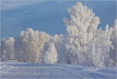 мороз снежком укутывал