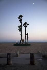 Image result for seal beach