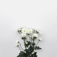 Flowers take time to bloom and so does your Flower Aesthetic, White Aesthetic, White Flowers, Beautiful Flowers, White Feed, Feeds Instagram, Flower Art, Planting Flowers, Nature Photography