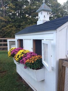 A little fall color for the chicken coop