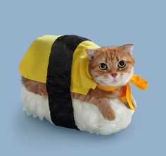 Sushi Cat - Atypique.co #1