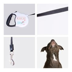 My Heart Races Retractable Dog Leash by 26 Bars & a Band | Pretty Fluffy