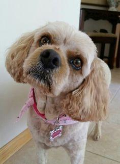 Daffney dog...our puppy girl