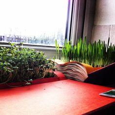 Cat grass Mustard seed Cress  Book art  Josie Selfe