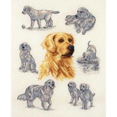 Counted Cross Stitch Kit RTO-Chihuahua Noir