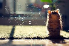 A kitten and some bubbles.