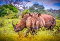 Rhino Brothers by Mauritz Janeke on 500px