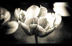 dark mood flower - Google Search