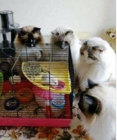 Cat Reality Show