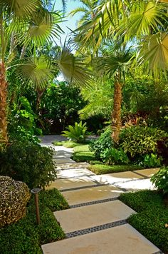 Tropical Landscape/Yard with Windmill Palm Tree, Sago Palm Tree, Pathway, exterior tile floors