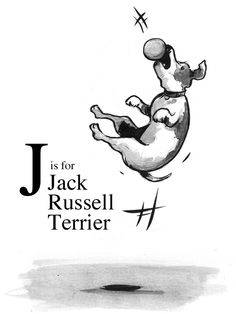 """J"" is for Jack Russell Terrier <3"
