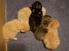 Schöne junge gesunde Haus Katzen Baby`s geimpft ab sofort 25137056 Ab Sofort, Animals, Pretty Boys, Health, Animales, House, Nice Asses, Animaux, Animal