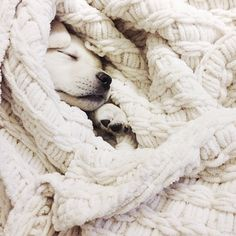 snuggled up pup.