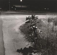 From Summer nights series, Robert Adams, 1976-82.