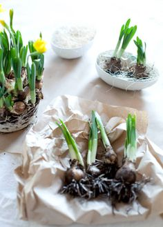 Easter // påske - KREATIV-I-TET
