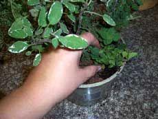"""How To Make An """"Aerogarden"""" Counter Top Garden For Under $10"""