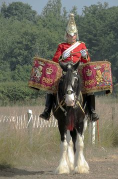 One of the Household Cavalry Mounted Regiment's drum horses.