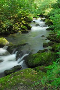 Green rivers of late summer, Shaugh Prior Southern Dartmoor yesterday   www.rachelburchphotography.com