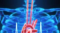 V súvislosti s ochoreniami srdca sa zväčša hovorí o vysokom tlaku, hladine cholesterolu či obezite. Odborníci však upozorňujú na škodlivý vplyv homocysteínu. Neon Signs
