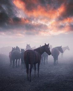 nature pictures horses / horses nature + horses nature wild + horses in nature + beautiful horses rare mother nature + nature and horses + horses beautiful nature + beautiful nature animals wild horses + nature pictures horses Pretty Horses, Horse Love, Beautiful Horses, Animals Beautiful, Majestic Horse, Beautiful Sky, Beautiful Morning, Beautiful Women, Wilde Mustangs