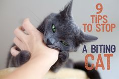 9 Tips To Stop A Biting Cat!