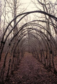 By Dominique Bailly -- Domaine forestier de Crogny, Aube, France.