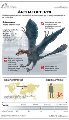 The Archaeopteryx is a Jurassic-era creature that bridges the gap between dinosaurs and birds. Dinosaur Facts, Dinosaur Fossils, Feathered Dinosaurs, Jurassic Park World, Extinct Animals, Prehistoric Creatures, Zoology, Fauna, Science And Nature
