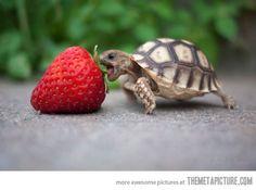 turtle-berry