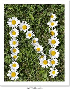 """""""N - letters of daisies"""" - Art Print from FreeArt.com"""