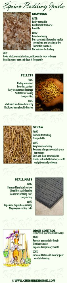 The bedding you use in your horse's stall affects not just the time spent cleaning it and your finances, but your horse's health as well. Consider these options before your next trip to purchase bedding.