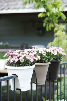 Round Anthracite Flower Bridge Plastic Planter (Set of 11 in. Anthracite Flower Bridge Planter (Set of Anthracite at The Home Depot Deck Railing Planters, Balcony Planters, Balcony Railing, Deck Railings, Balcony Gardening, Cheap Planters, Porch Planter, Glass Balcony, Metal Railings