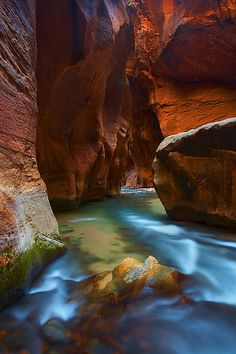 Zion National Park Cut my foot walking in these narrows, but it was so worth it!