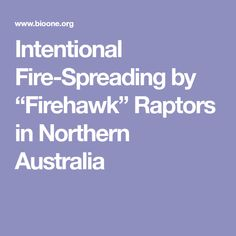 "Intentional Fire-Spreading by ""Firehawk"" Raptors in Northern Australia"