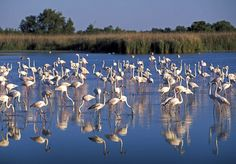 This bit of land south of Arles, gripped between the river's two branches, is for many, synonymous with sandy beaches, stretches of water shimmering in the sun, and landscapes sheltering a wild and colorful fauna.