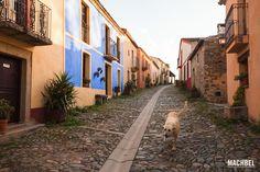 Perro guardián en la calle principal del pueblo abandonado de Granadilla, Extremadura, España