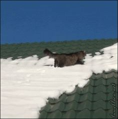 How my Monday's go! Poor cat slides of roof.