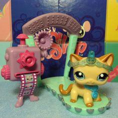 Littlest Pet Shop LPS RARE CARAMEL SWIRL CURL SHORT HAIR CAT 1024 w/ accessories #Hasbro