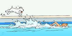 1970 – Tintin, champion de natation • Tintin, swimming championship Illustration réalisée pour le « Journal Tintin » 24-26-3-70. #tintin #herge