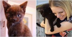 """Wesley the """"Pirate"""" kitten spent months alone in a shelter waiting for someone to recognize his outer and inner beauty."""