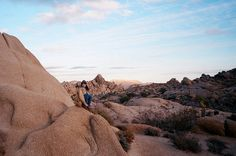 Joshua Tree by Amy Merrick, via Flickr