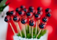 lady-bug-birthday-party-: POPS! SO ADORABLE!