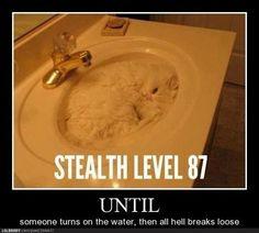 Stealth cat