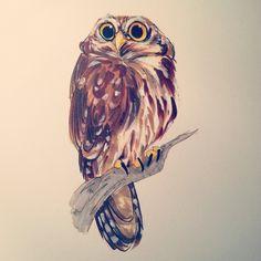 Day 69 - Pygmy Owl