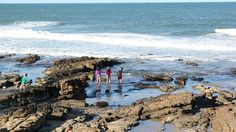 While on holiday in the Sunshine Coast make sure that you enjoy all the region has to offer.. Don't limit the kids to sand castles, check out some of the rock pools along the coast line and the sea life that lives in and around the rock pools. http://www.catalinaresort.com.au/apartments.html