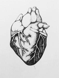 Anatomy - heart.