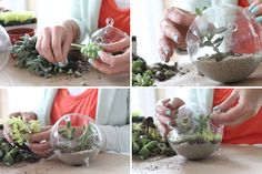 How to Make a Succulent Sea Terrarium via Making it Lovely ~ http://makingitlovely.com/2012/04/25/how-to-make-a-succulent-sea-terrarium/ ~ lots of great info for grown-ups or kids!