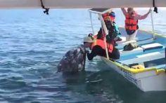 Un touriste embrasse une baleine!