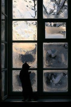 Frosty morning Window Cat by teressa